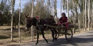 Uyghur studies