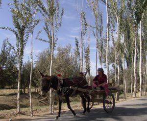 Uyghur-studies-e1409255482137