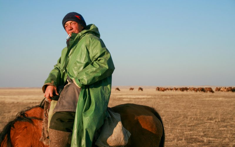 Cara Kerven, Hired camel shepherd in Moinkum, Jambyl Province, Kazakhstan.